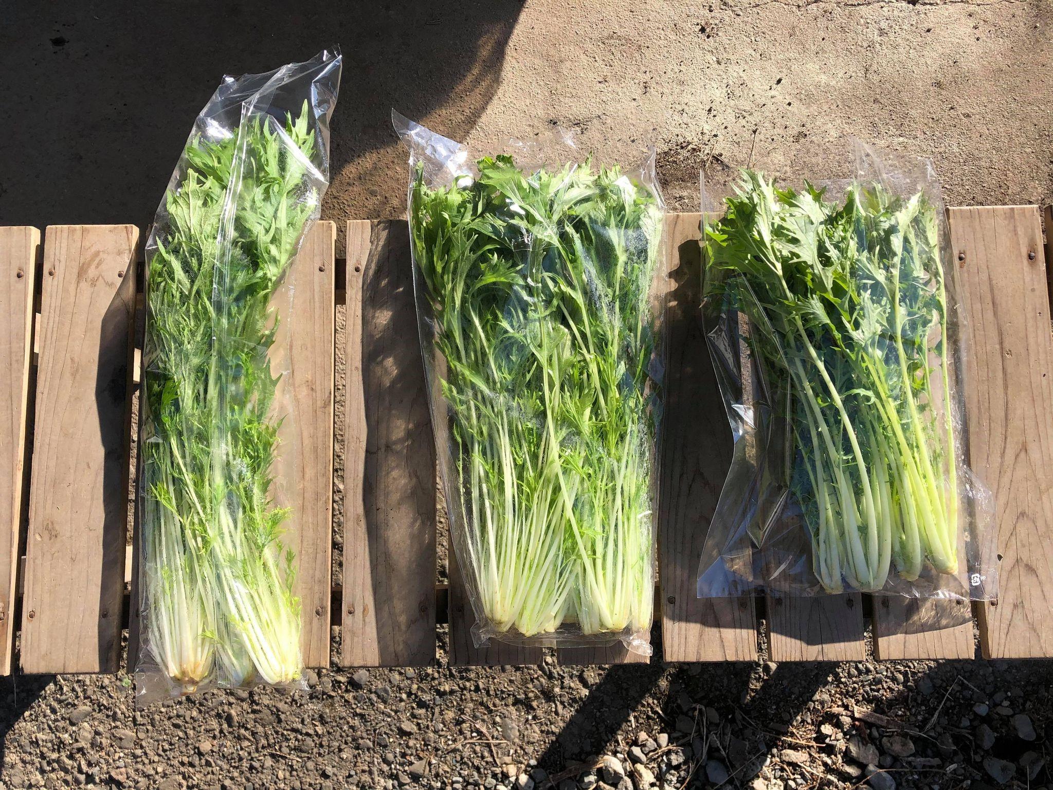 自然栽培の野菜は枯れ、慣行栽培と有機栽培の野菜が腐るのは本当か実験しました。