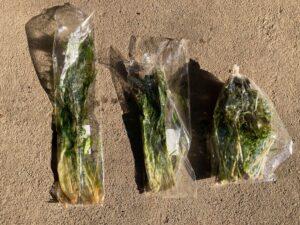 野菜の腐敗実験一ヵ月後の結果、「発酵」と「腐敗」の違いについて